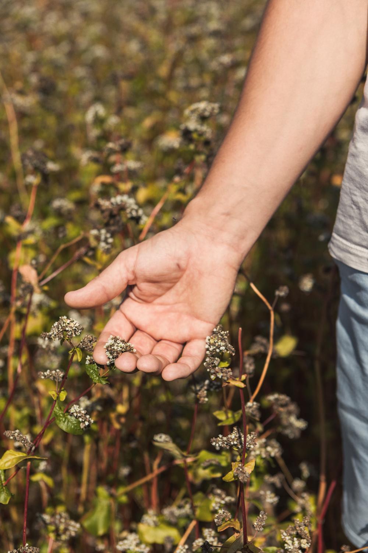 George grows buckwheat on his farm
