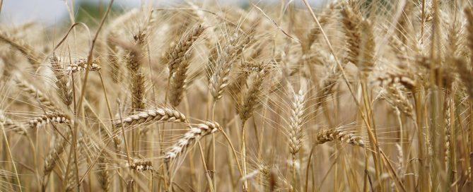 2020 - Ensure pesticide legislation does not slip during trade deals