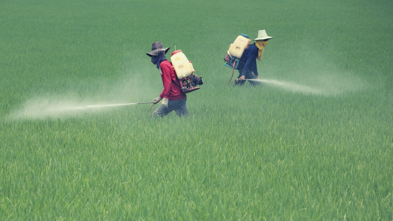 44% of farmers poisoned by pesticides each year globally