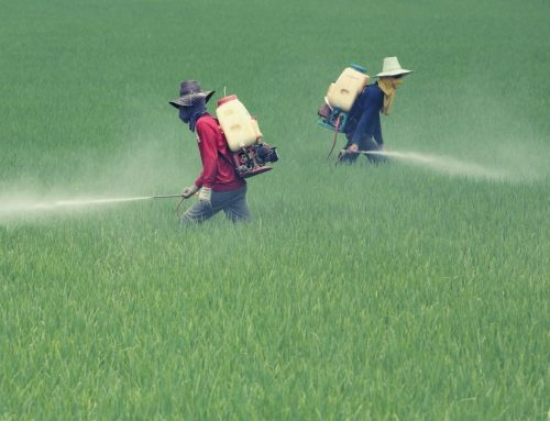 Dramatic rise in global pesticide poisonings revealed