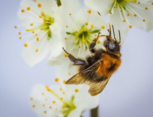 A win for all pollinators
