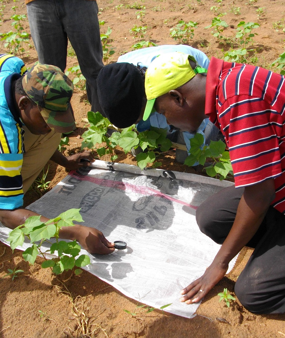 Agroecology in Benin - Cotton Farming