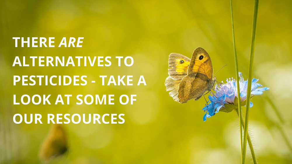Find out more alternatives to pesticides using our resources section.
