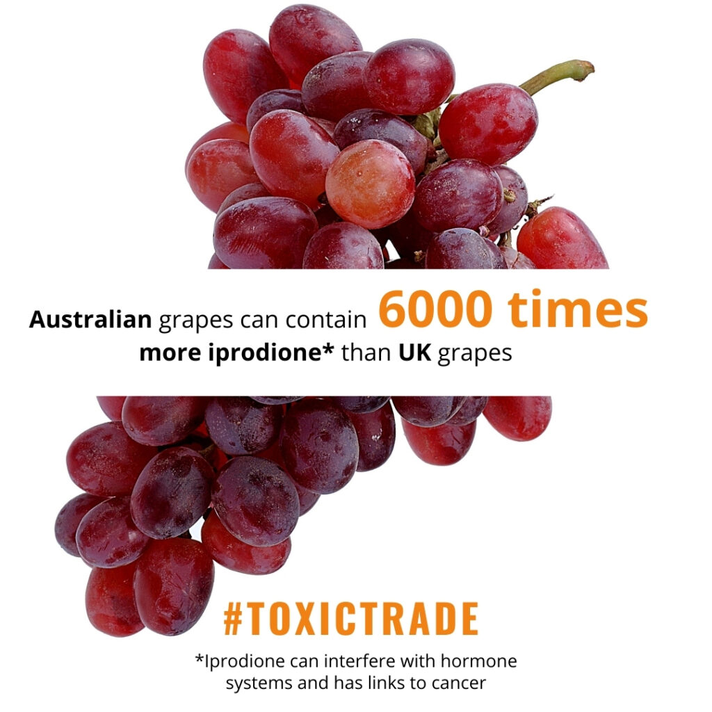 Australian grapes can contain 6000 times more iprodione than UK grapes