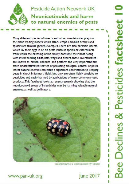 Bee Factsheet 10