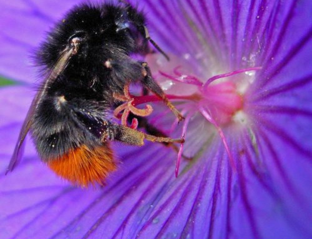 One step closer to ban on three bee-toxic pesticides