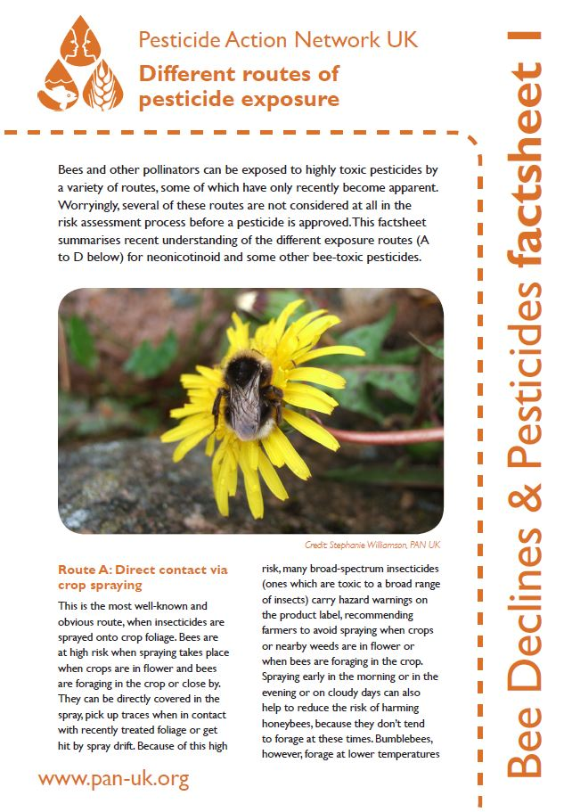 Bee Factsheet 1