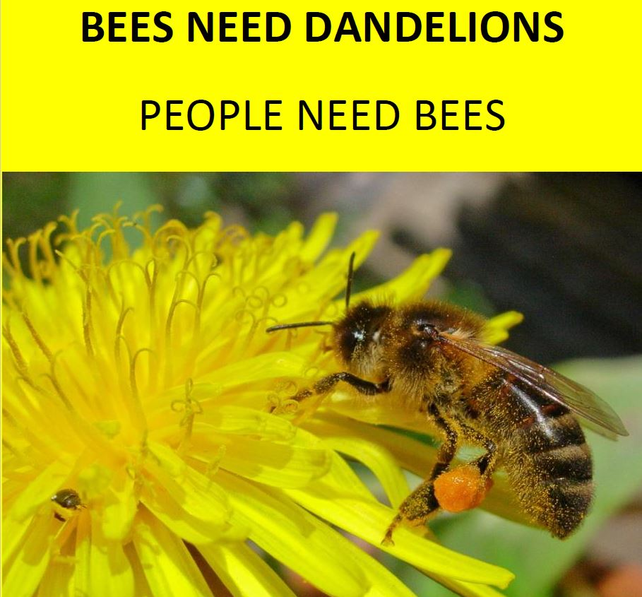 Image result for images of bees and dandelions