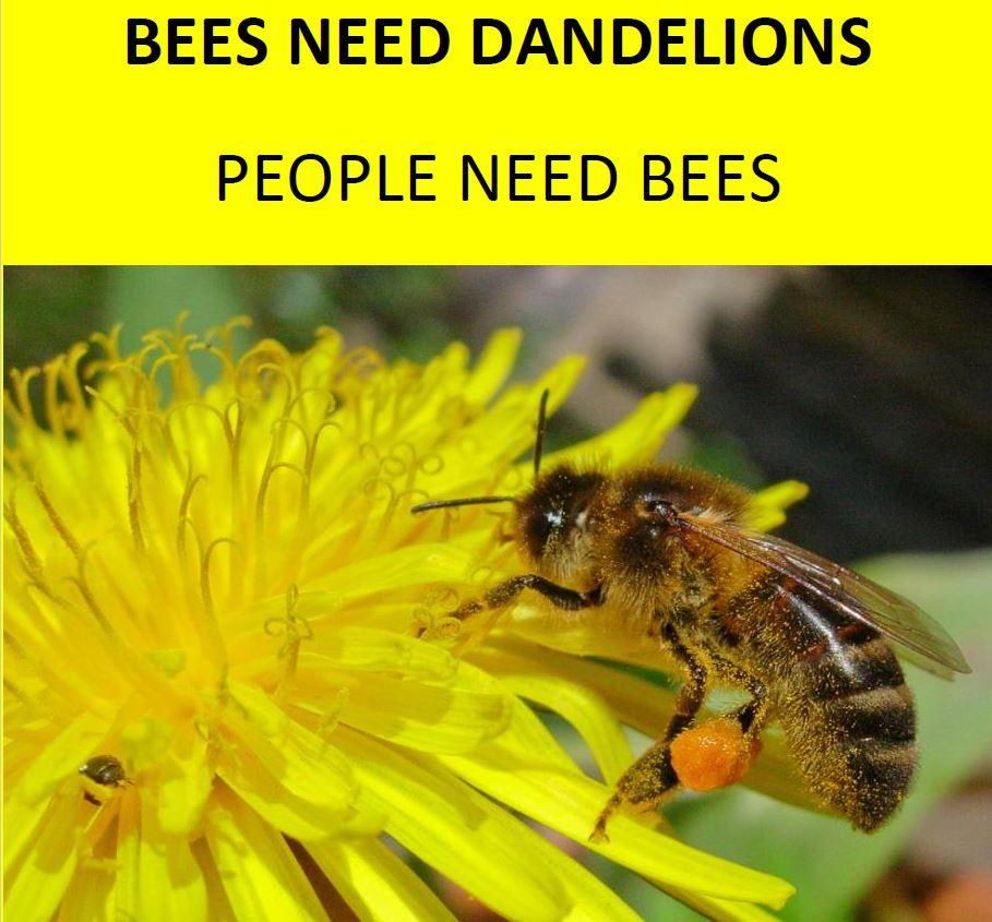 Bees Need Dandelions