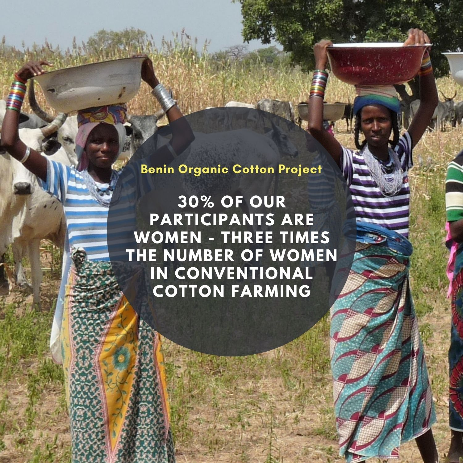 30% of the farmers on our cotton projects in Benin are women