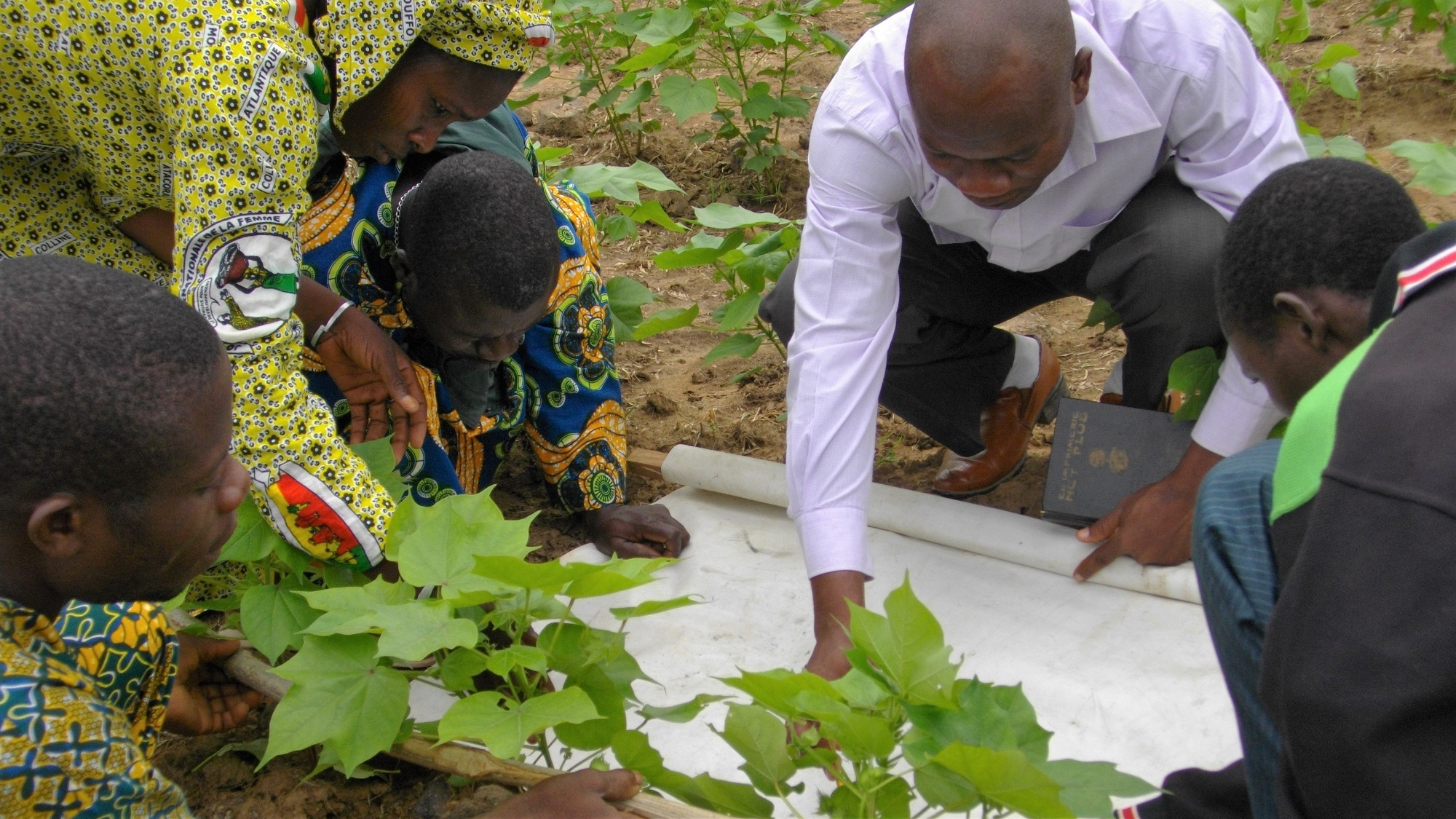 Teaching cotton farmers in Benin about Integrated Pest Management (IPM) techniques