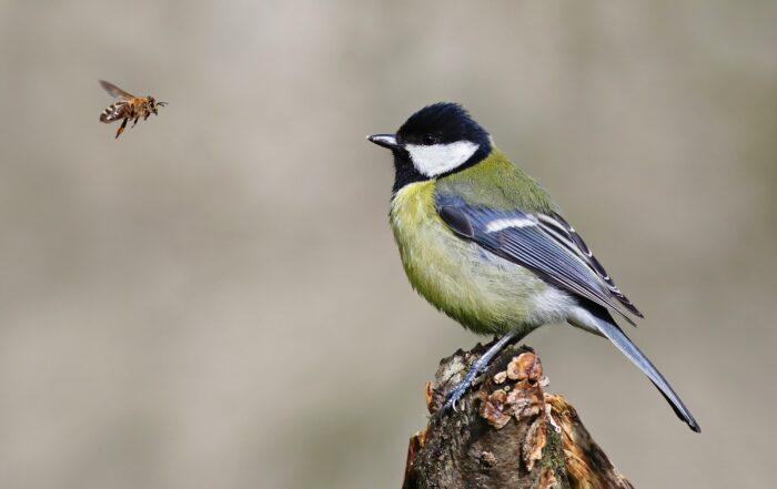 International Biodiversity Day 2021