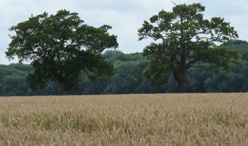 Brexit - Dark Days Ahead for UK Agriculture?