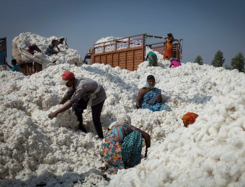 Are big brands doing enough to support sustainable cotton farmers?