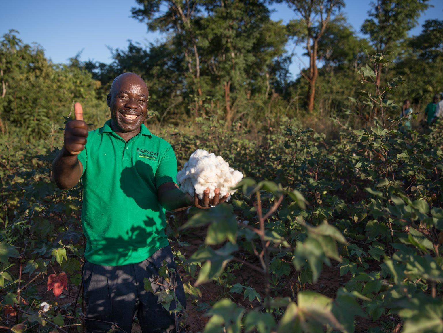 Cotton Ranking 2020
