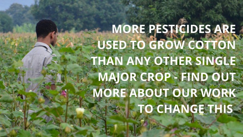 Find out more about the work we do to end pesticide use in cotton