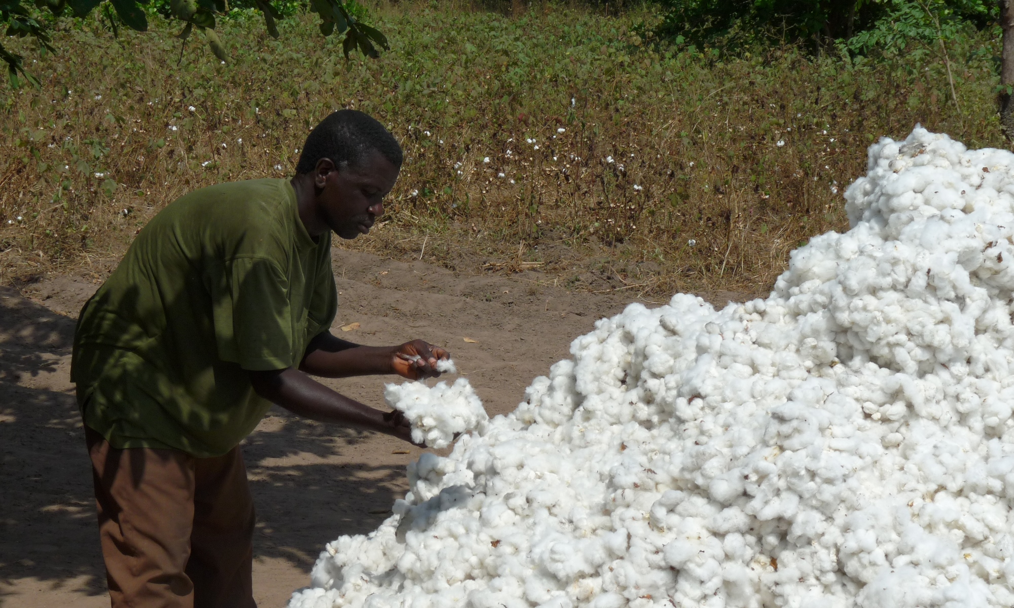 Cotton farming in Benin, West Africa