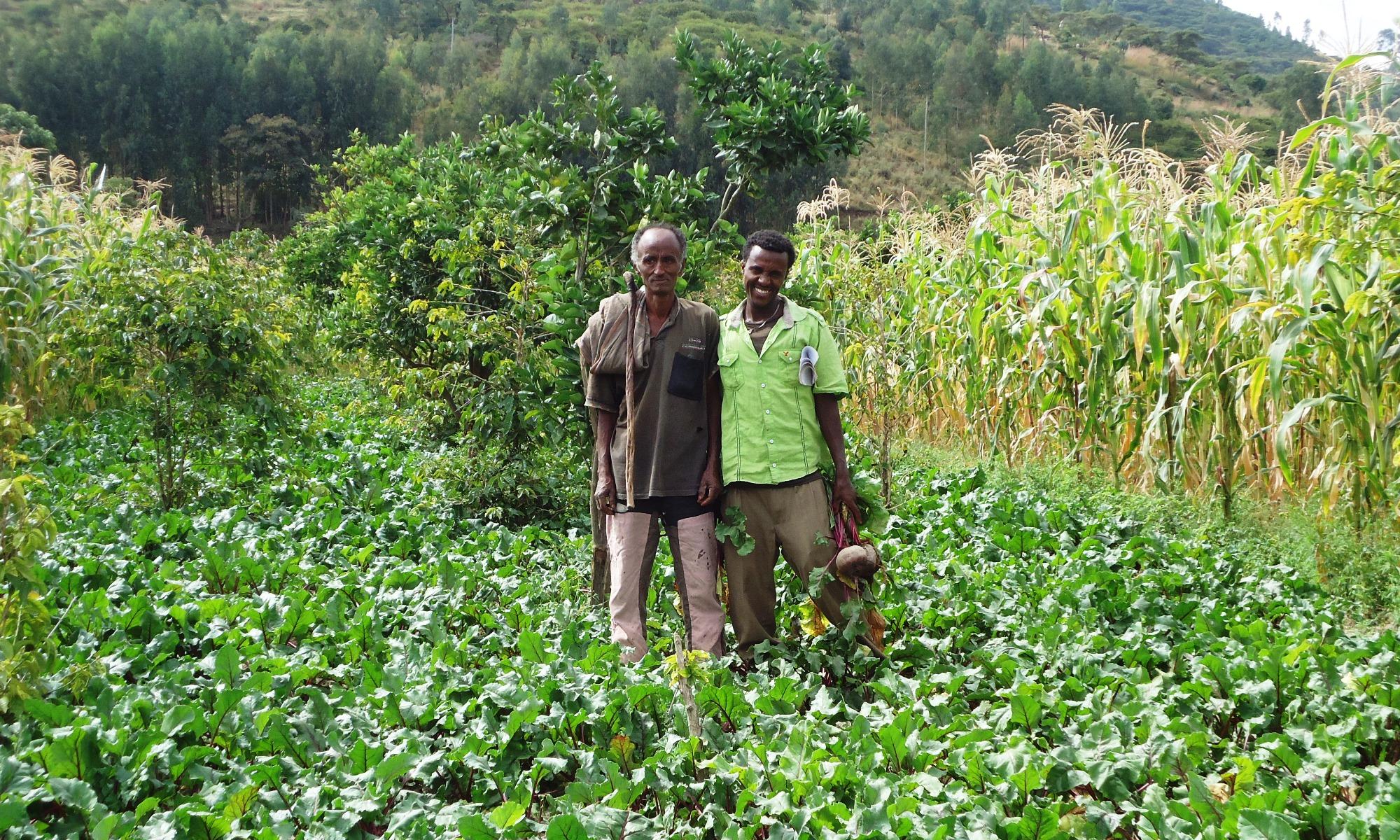 The rise of organic agriculture in Ethiopia - Pesticide