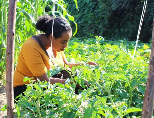 The rise of organic agriculture in Ethiopia