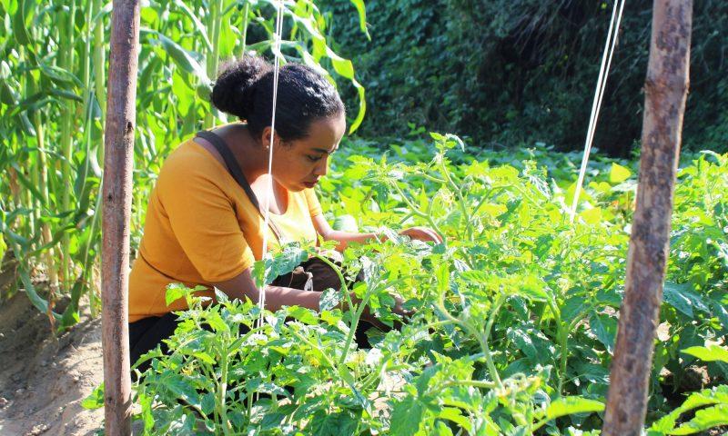 Encouraging organic agriculture in Ethiopia