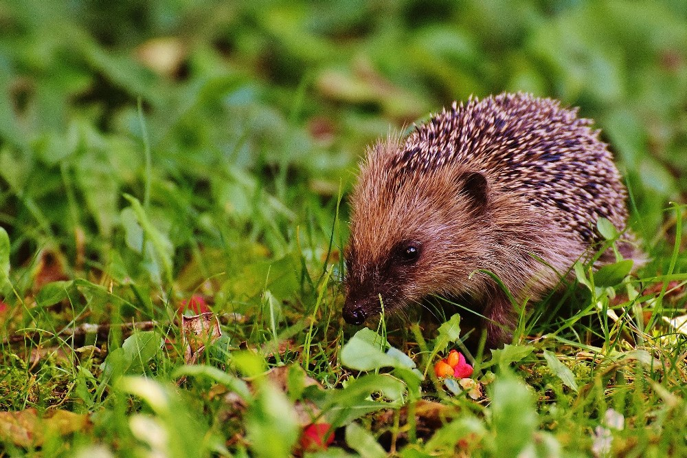 Protecting the Planet - pesticides poison wildlife and affect the natural food chain