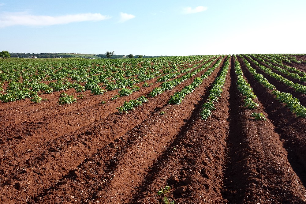Protecting the Planet - pesticides decrease soil biodiversity and quality