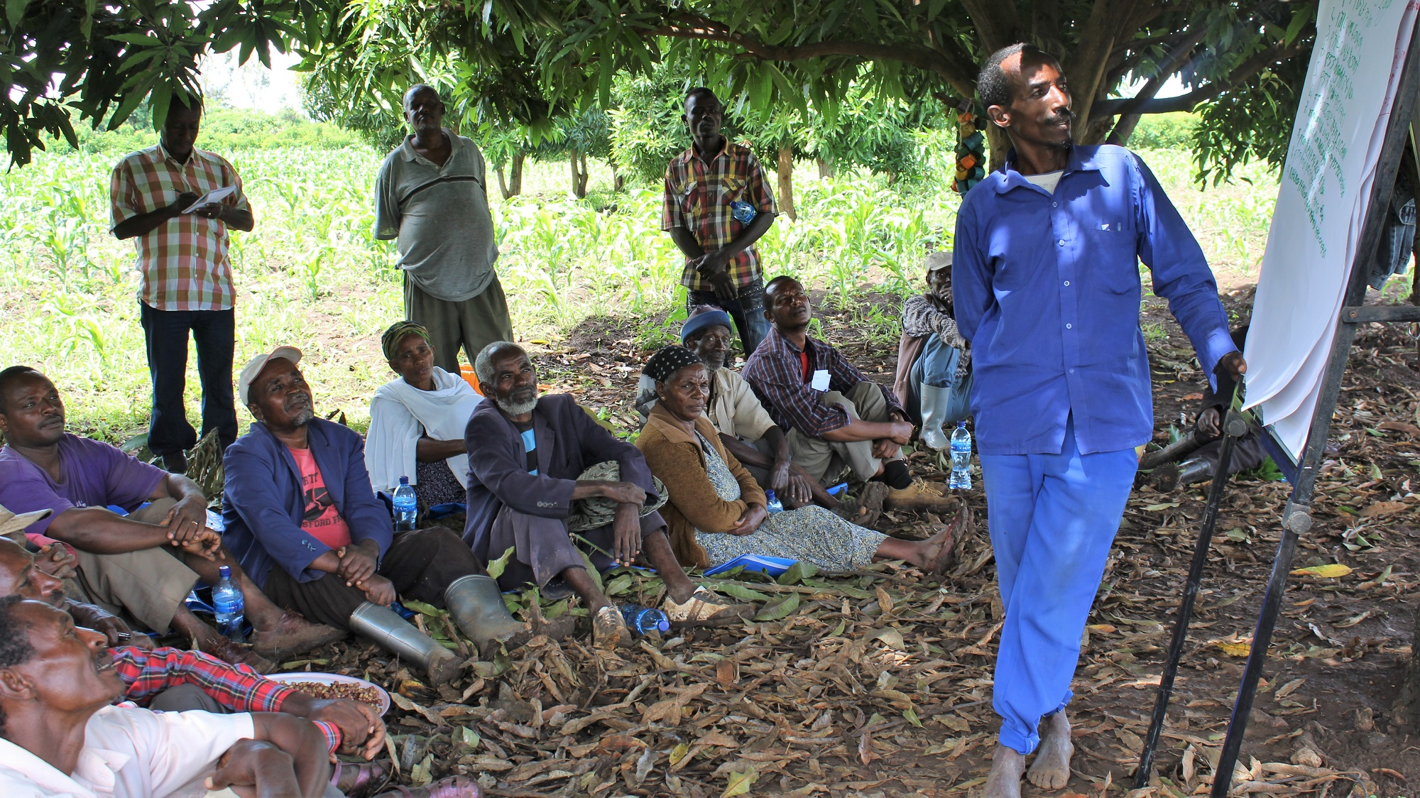 Farmers at a Farmer Field School
