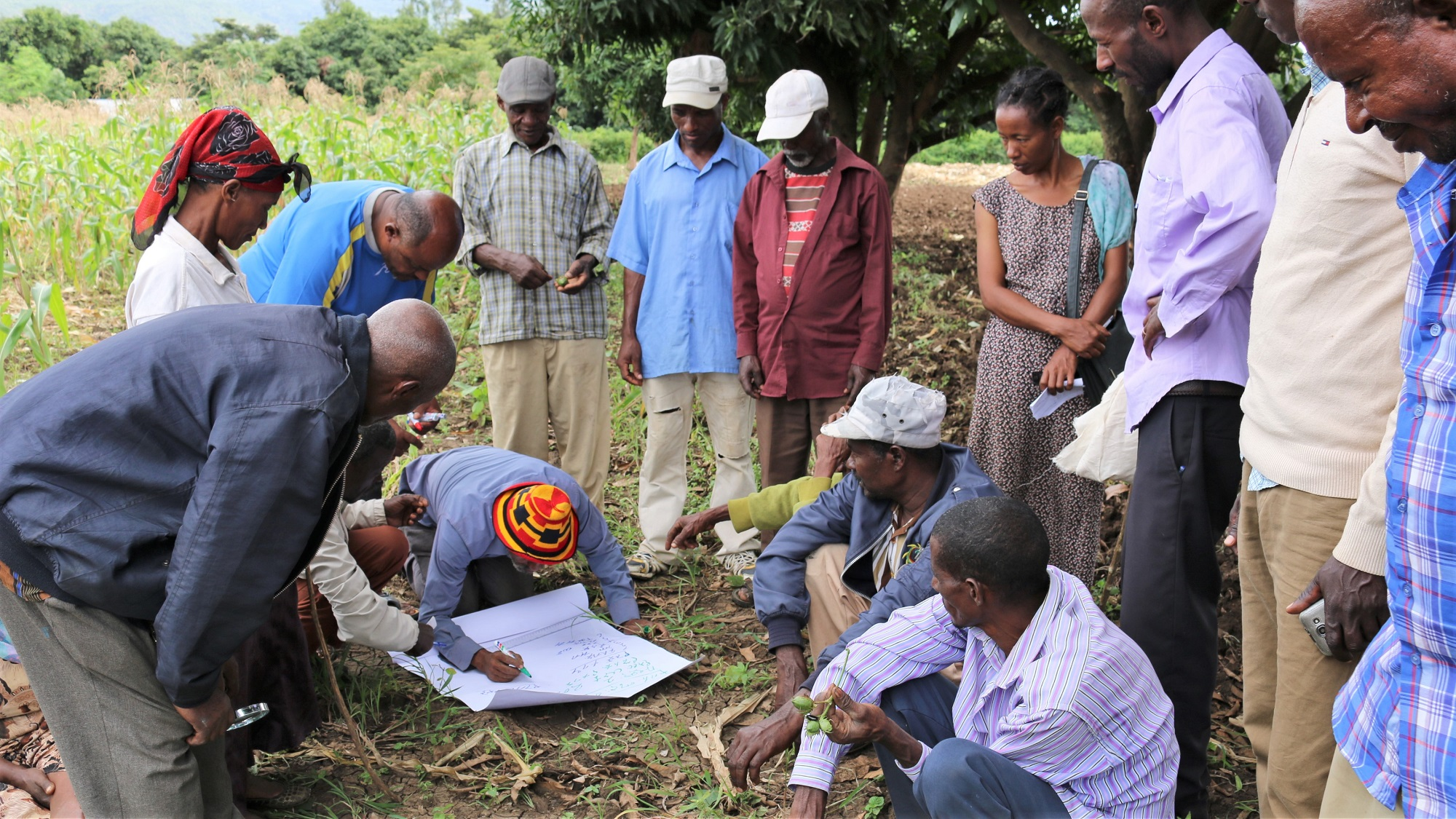 Working together at a Farmer Field School