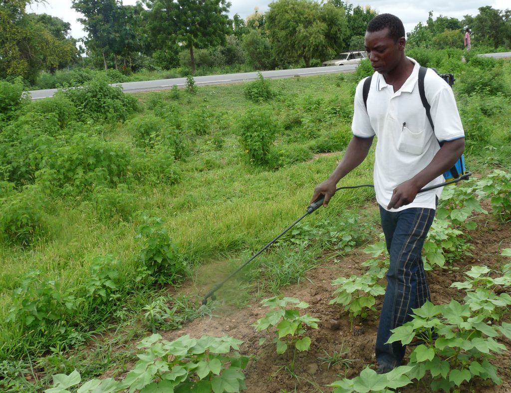 Thousands of cotton farmers and their families suffer from pesticide poisoning every year