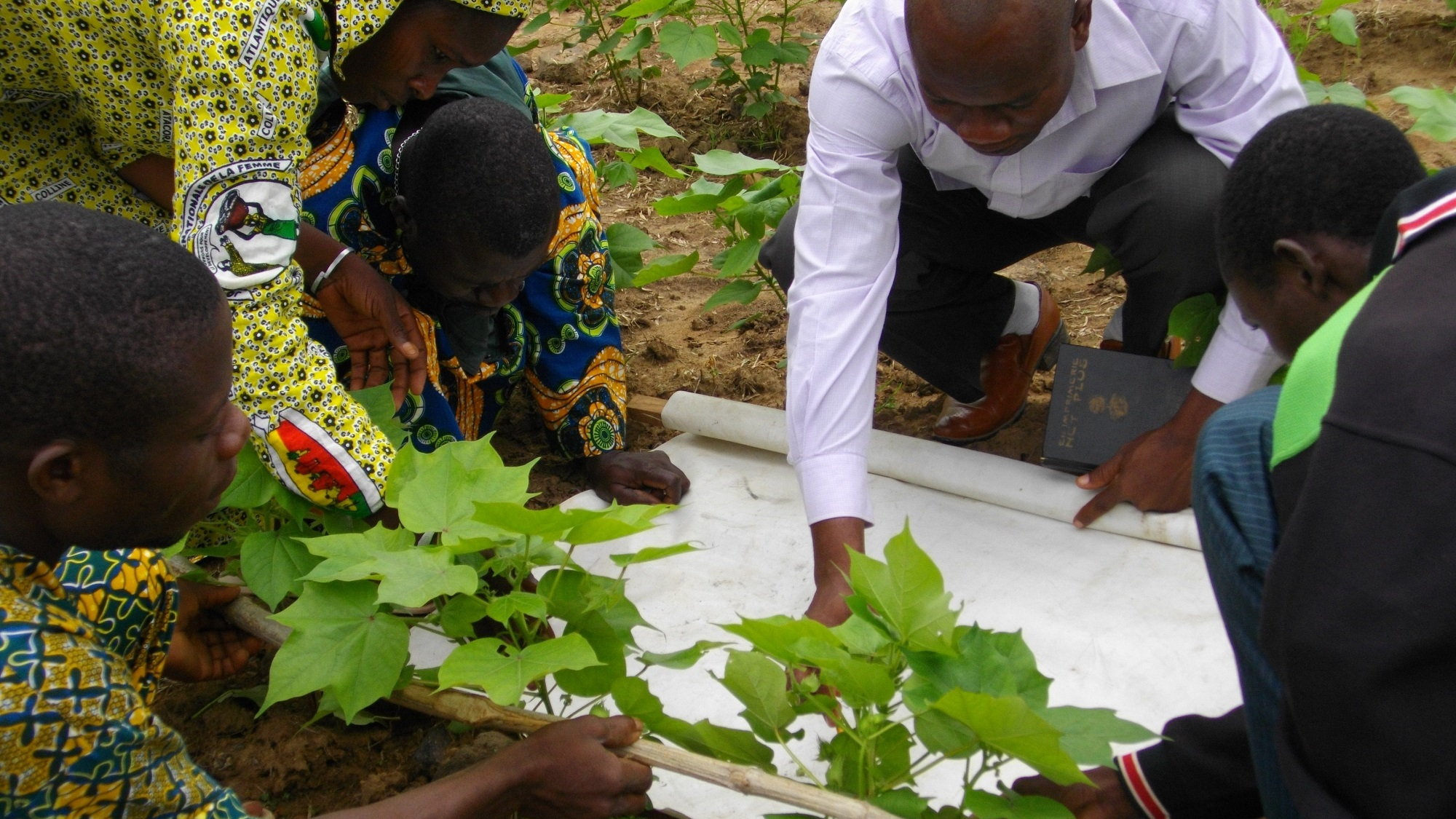 Farmers, extension officers and scientists working together to identify the most effective practices in organic cotton in Benin.
