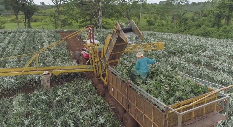 Machinery in operation at Valle del Tarso estate, selected by the pilot project to be dedicated to entirely organic pineapple production. (ICE PARA LN)