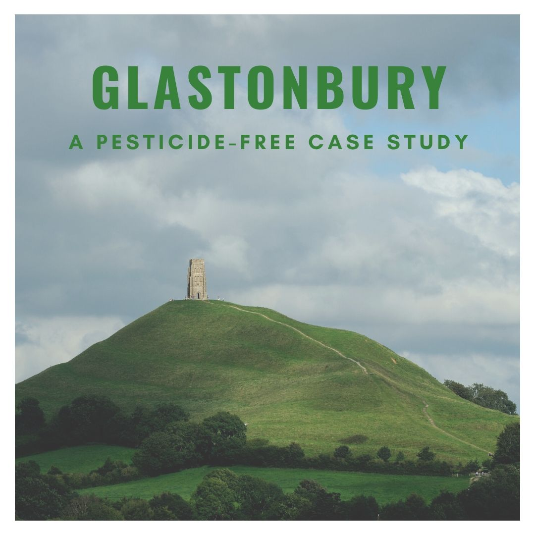 Glastonbury: A pesticide-free case study