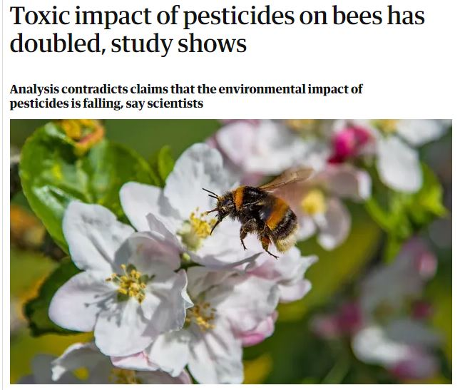 The Guardian - Toxic impact of pesticides on bees has doubled