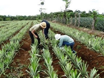 Phasing out highly hazardous pesticides in Costa Rica