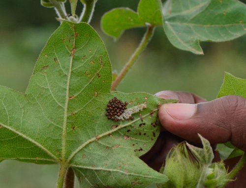The UK battle to define Integrated Pest Management