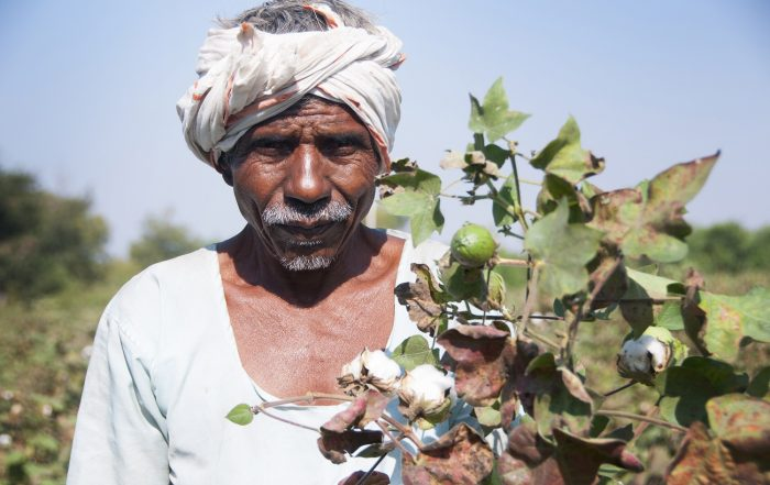 Is cotton conquering its chemical addiction
