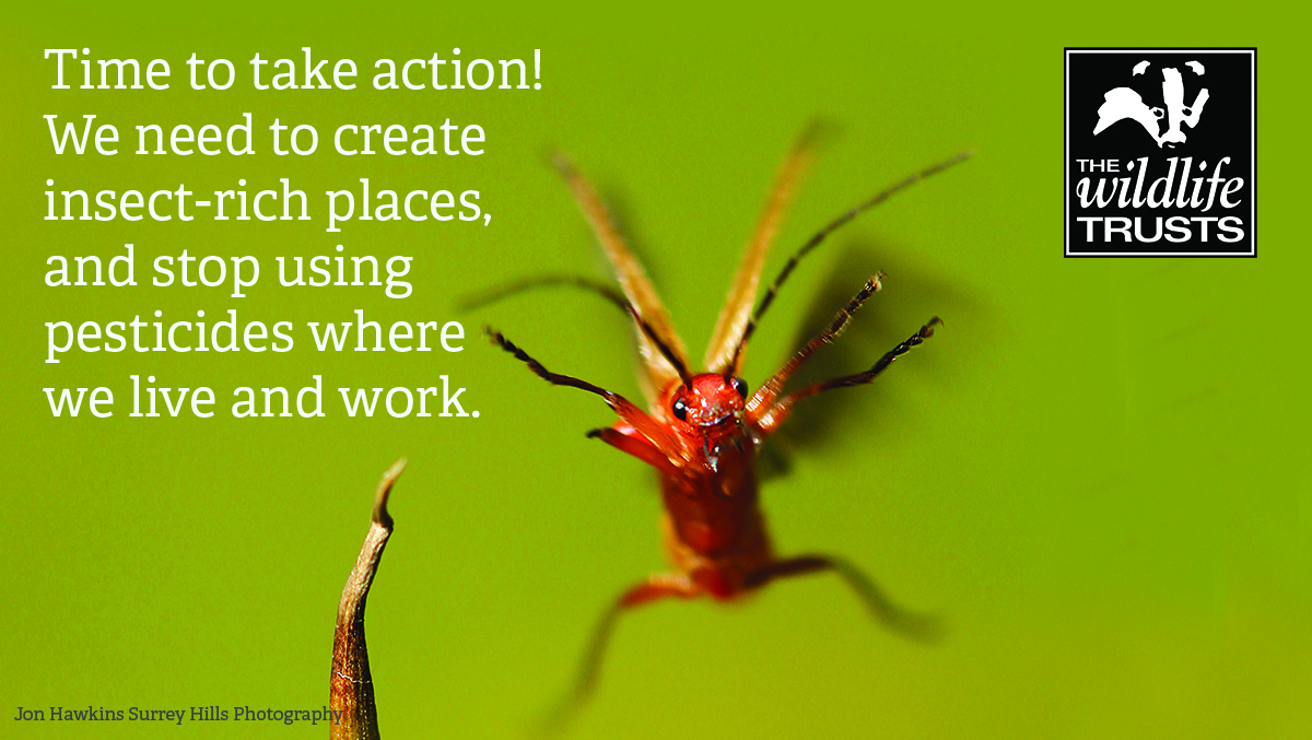 Reversing the decline in insects - take action