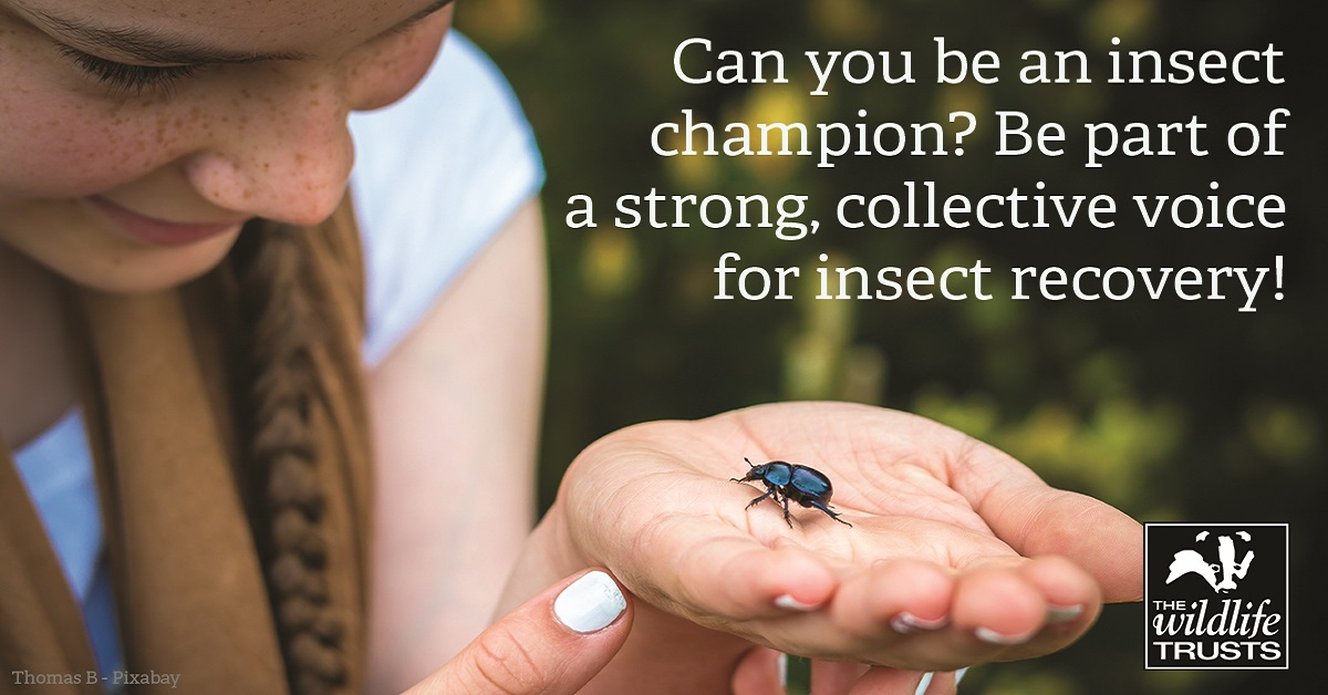 Luscumbe Farm dung beetle - Thomas B-Pixabay