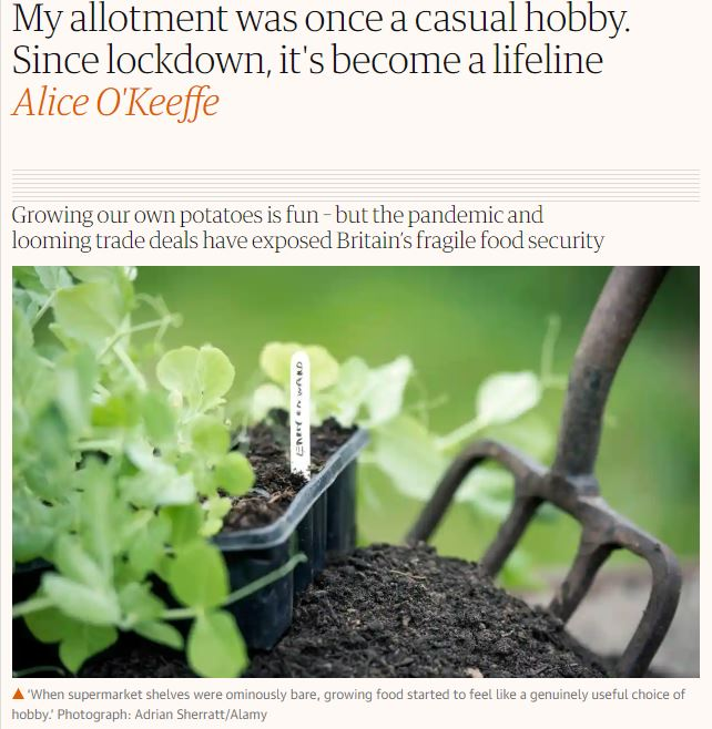 The Guardian: My allotment was once a casual hobby. Since lockdown, it's become a lifeline
