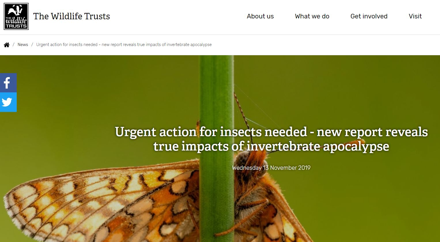 The Wildlife Trusts - Urgent action for insects needed - new report reveals