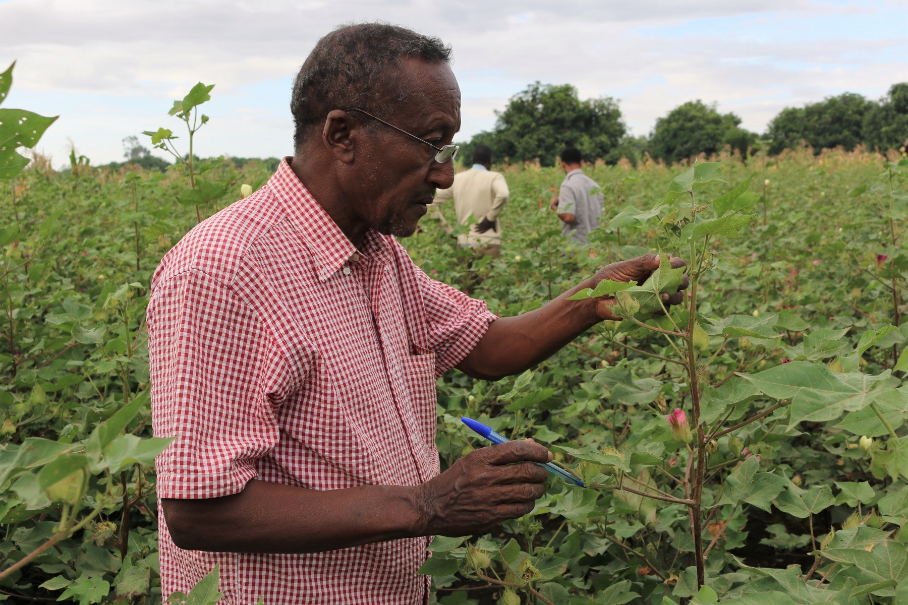 Monitoring sustainably-grown cotton crops in Ethiopia