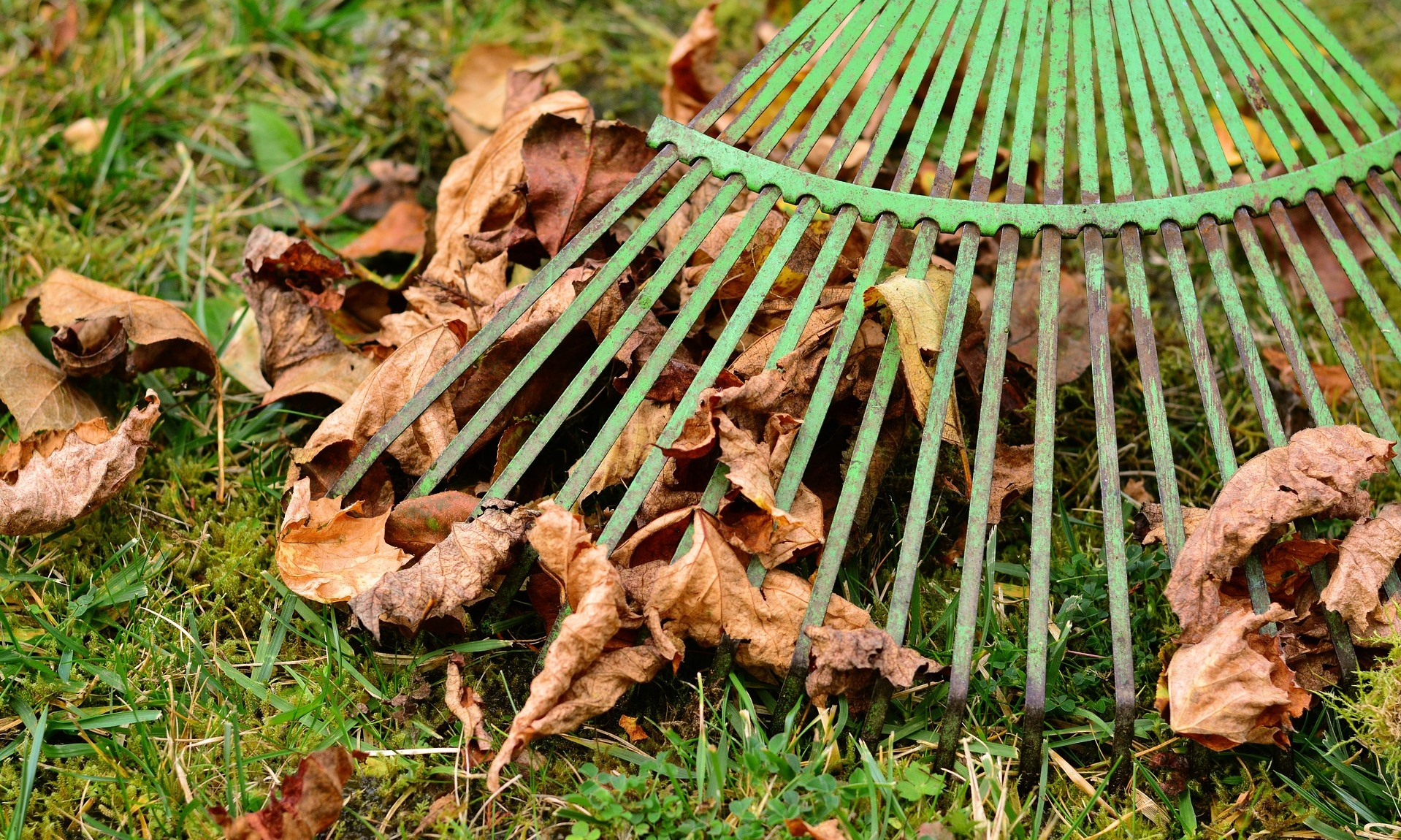 Use a spring-tined rake on an organic lawn in Spring