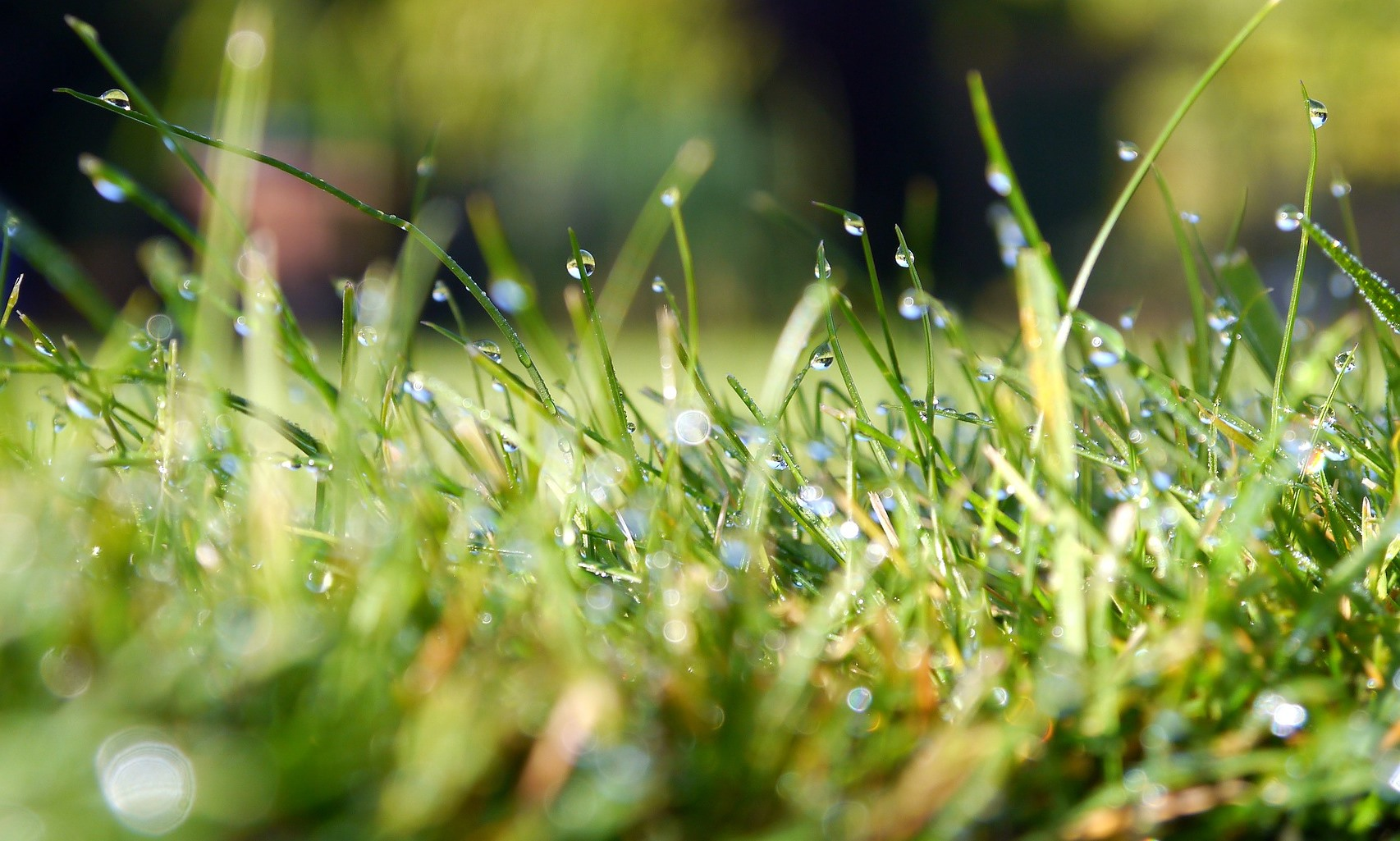 Tips on how to maintain an organic lawn