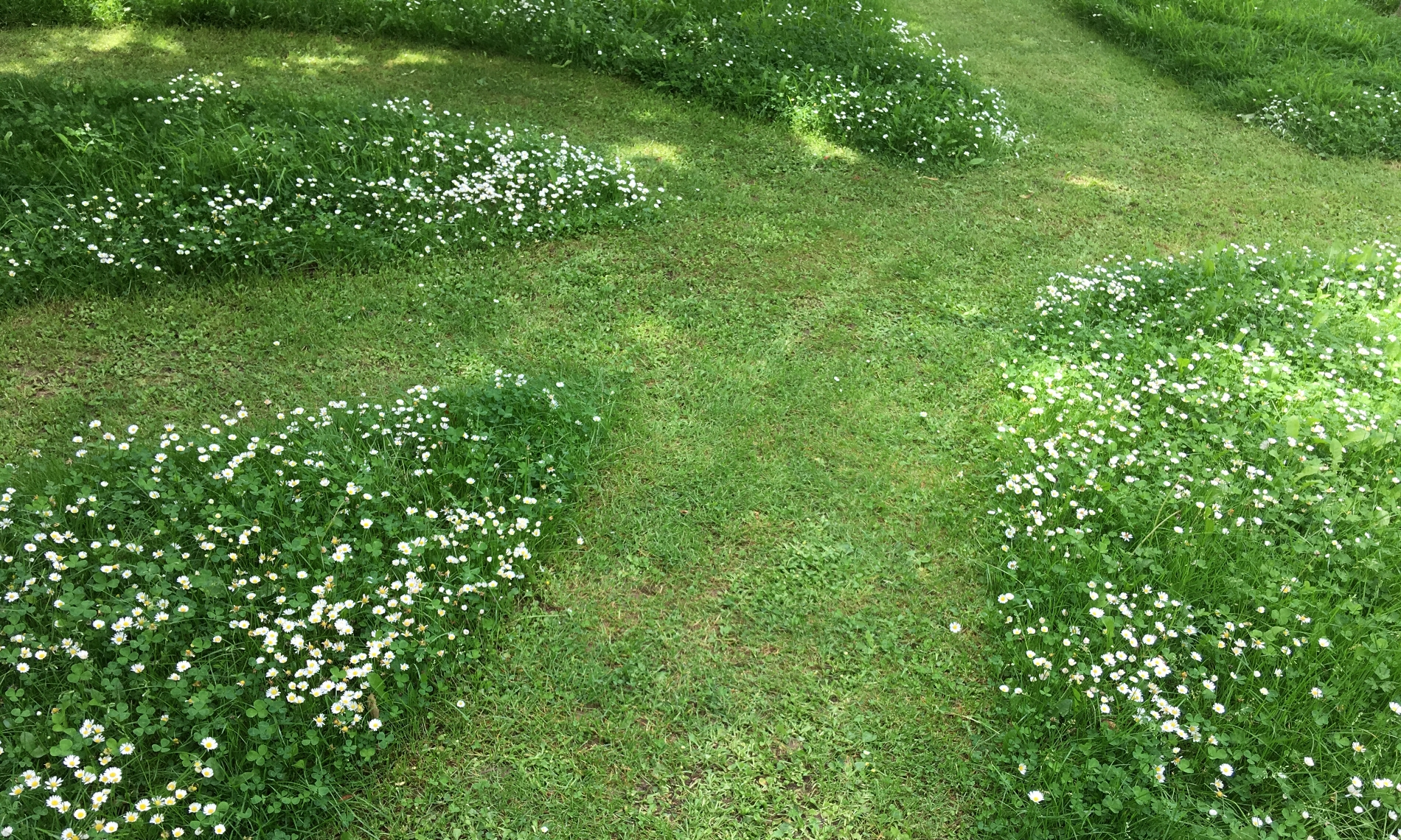 Mow paths through the lawn leaving wild flowers to grow for pollinators and other wildlife