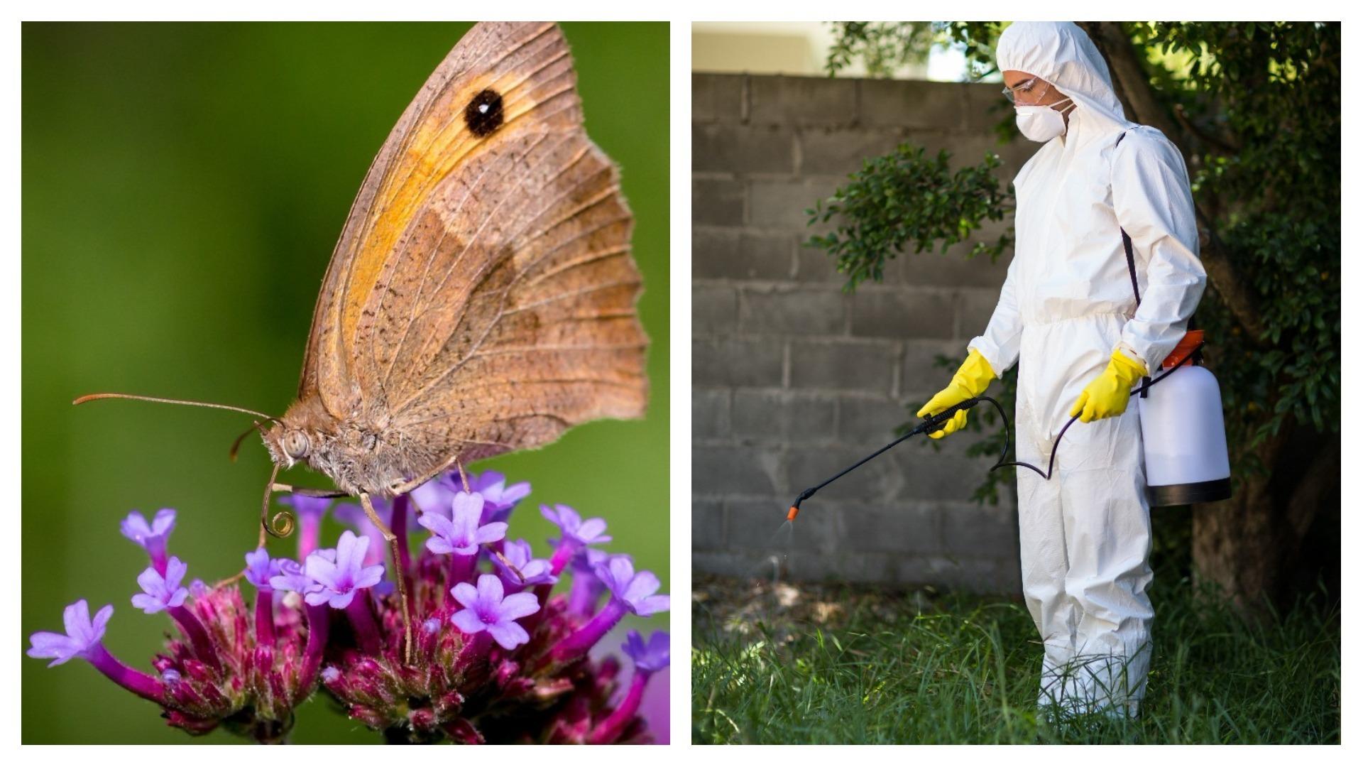 Pesticides impact our urban environment