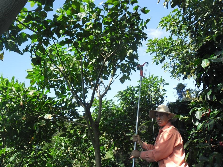 Shade management at Monsol Sustaninable Farm
