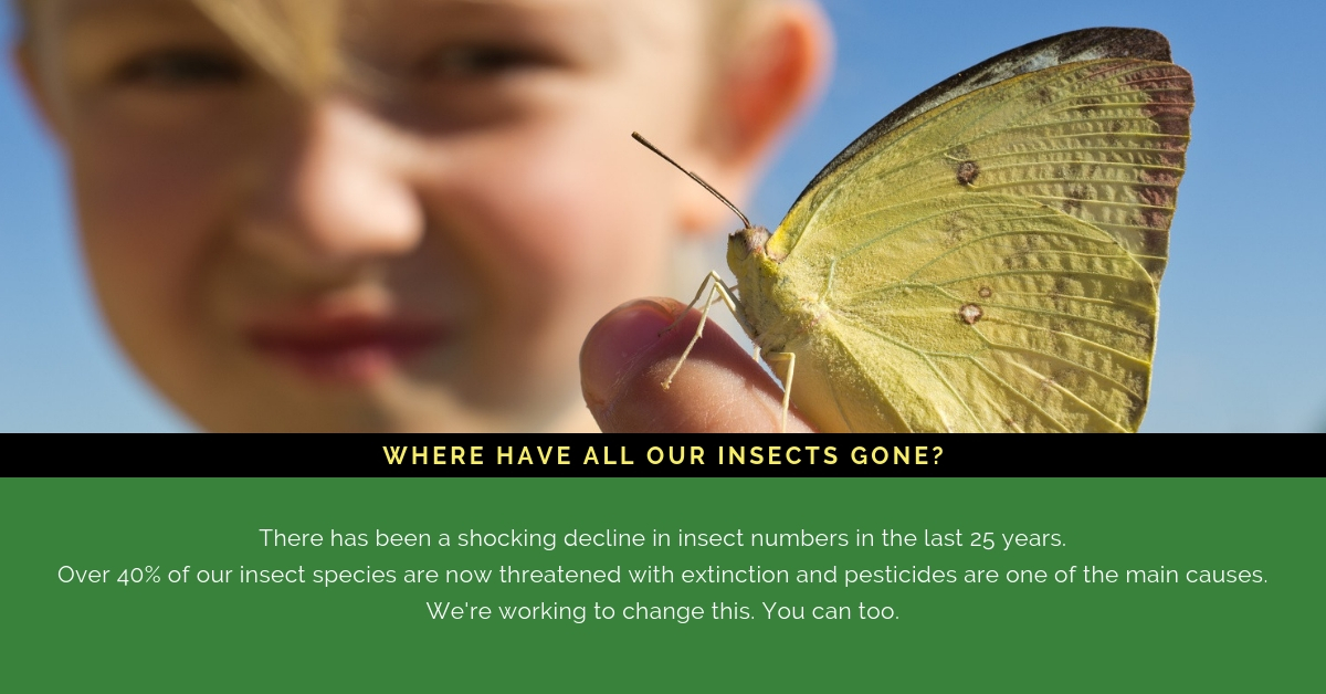 Where have all our insects gone? Join the pesticide-free revolution