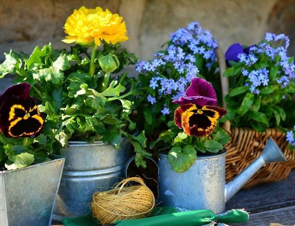 Is Your Garden Dangerous?