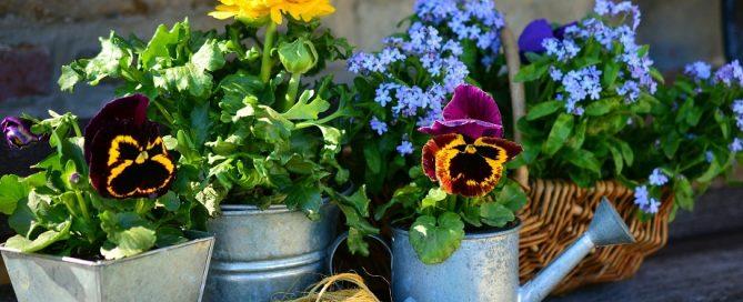 Silent Killer in Your Garden - Glyphosate