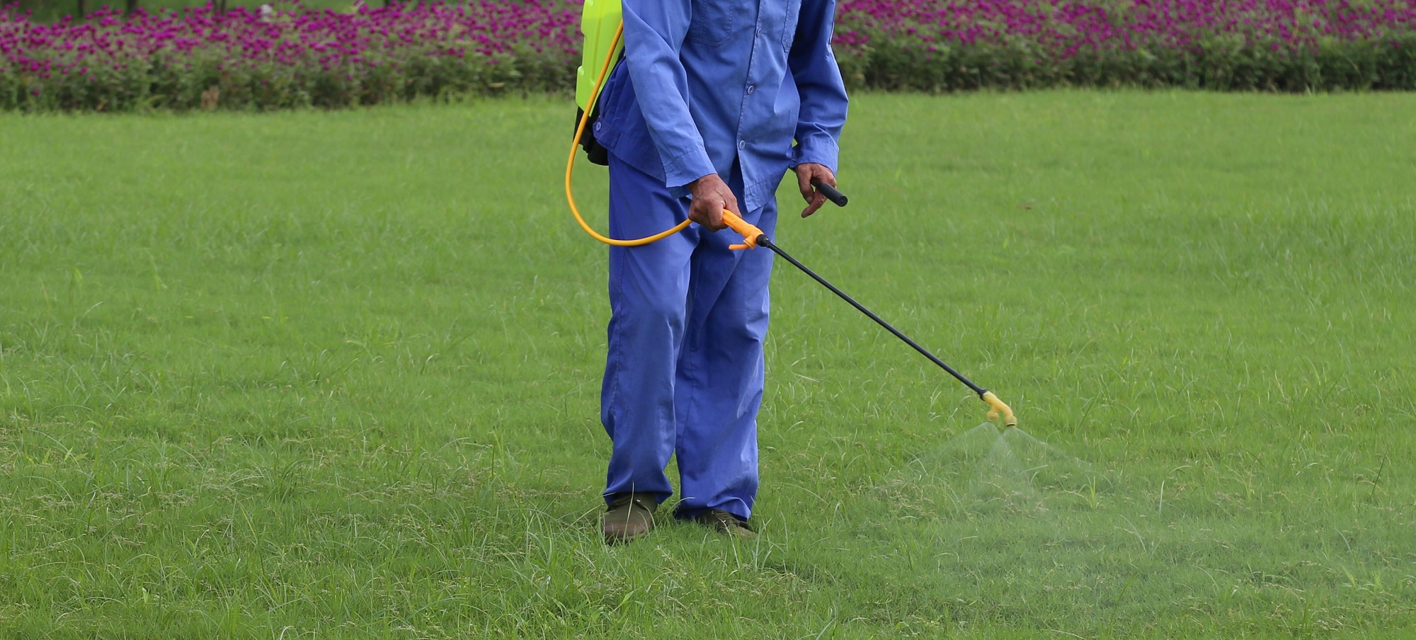 Pesticides are sprayed on our urban green spaces
